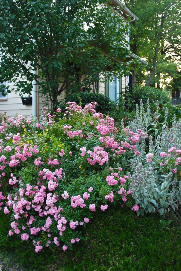 rose the fairy the fairy rose garden pinterest june 2010. Black Bedroom Furniture Sets. Home Design Ideas