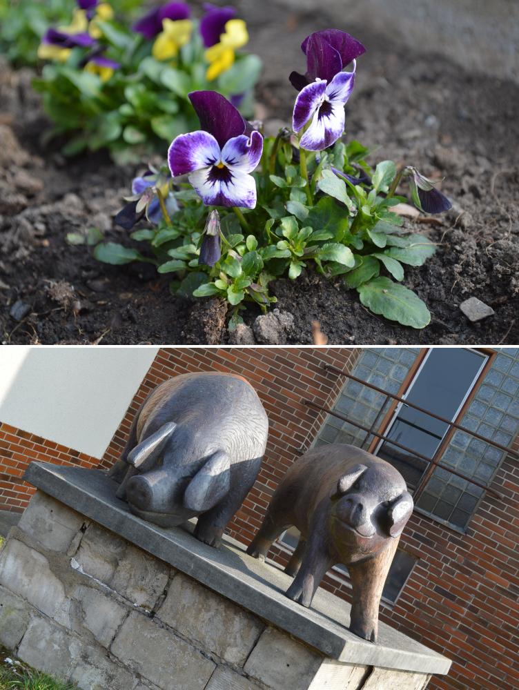 pig statue rural bucolic