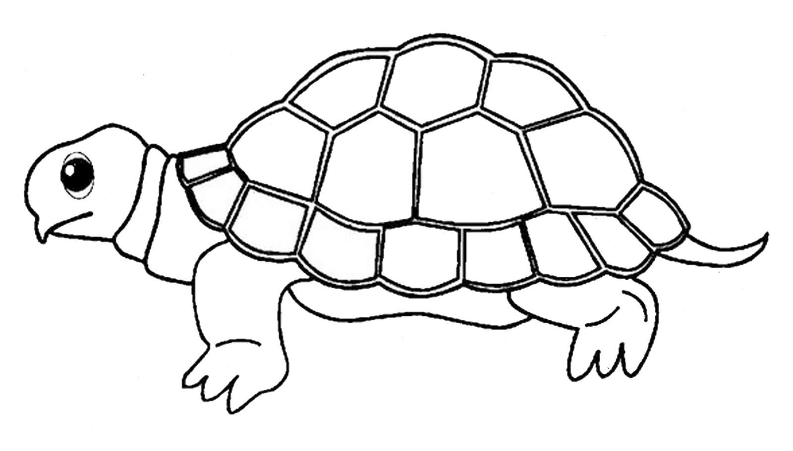Gambar Gambar Binatang Untuk Anak Tk Untuk Mewarnai Lucu Dan Mendidik
