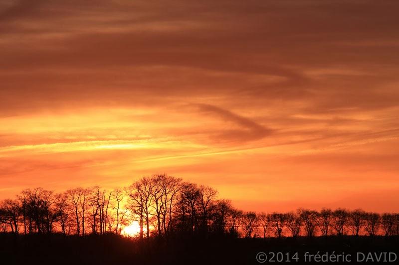 bosquet arbre crépuscule coucher soleil silhouette Seine-et-Marne