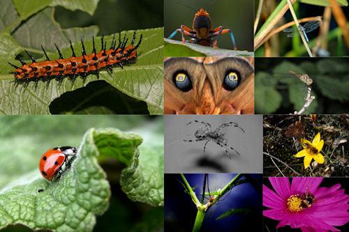 Los insectos de mi jardín VII (10 imágenes de uso libre)