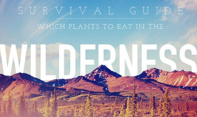 Survival Guide Which Plants to Eat in the Wilderness