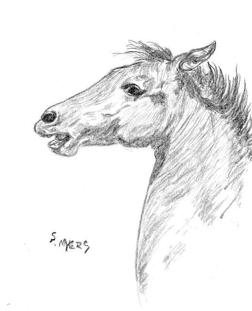 horse, colt, foal, art, arte, sketch, study, drawing, Sarah Myers, charcoal, S. Myers, wild, equine, eyes, young
