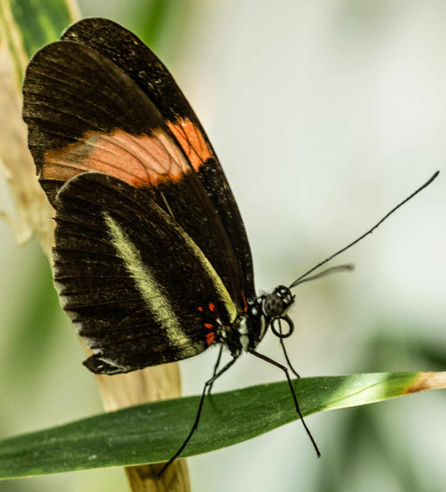 James gordon patterson photography butterfly wonderland i photographed in natural shaded light with a canon 5d mark iii and a canon 100mm macro lens hand held as tripods would be hard to use unless you had the buycottarizona