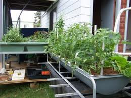 backyard aquaponics farming