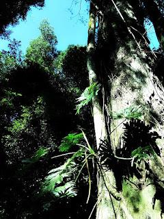 Árvore em meio à trilha da gruta no Parque Moconá.