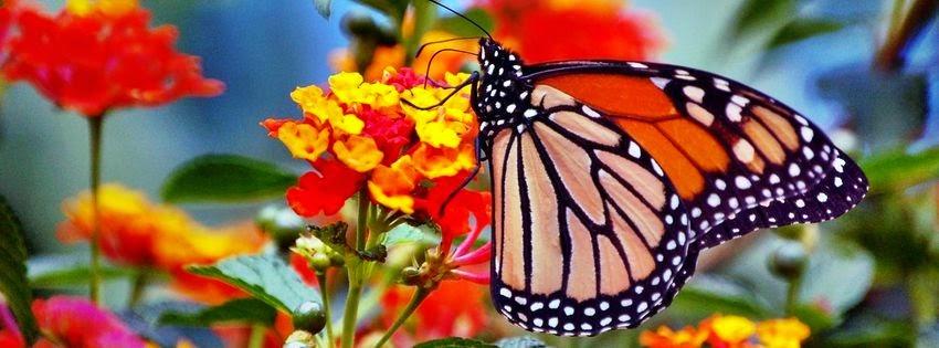 Couverture pour facebook papillon