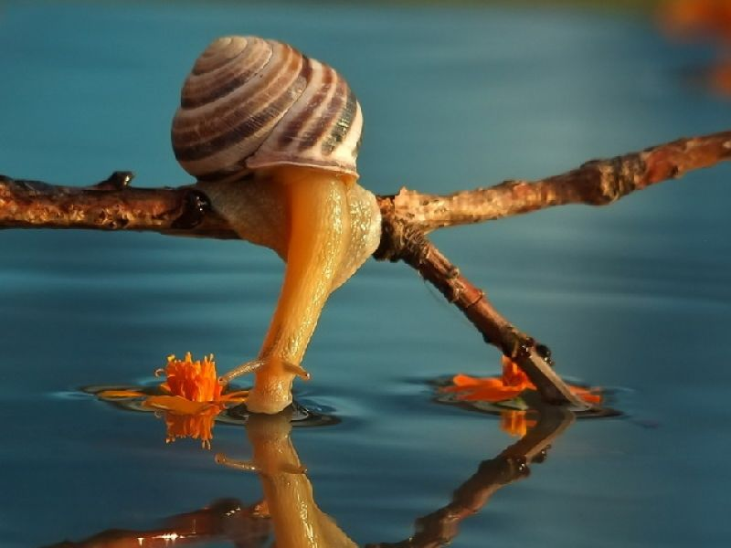 Snails are not slow. They just appreciate life.