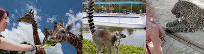 Things to do in Naples Florida, Labor Day weekend, Hilton Naples Hotel, Naples Zoo,