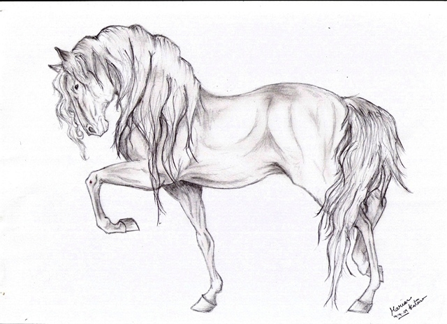 Funny horse drawing funny collection world