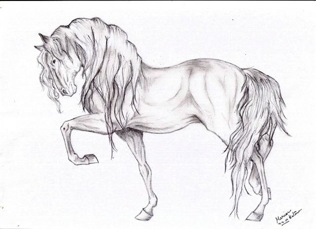 Funny Horse Smoking Drawing