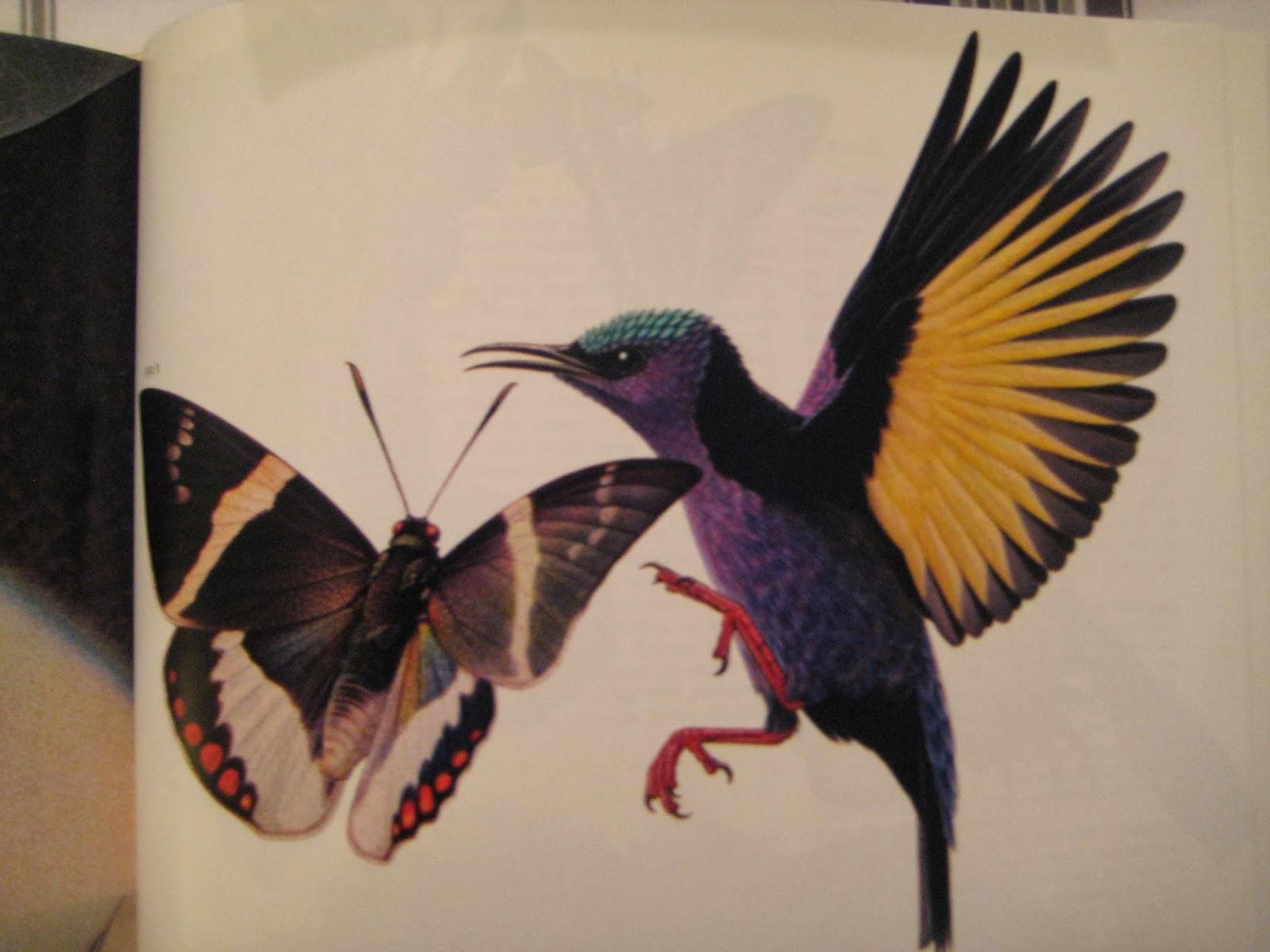Les toiles de jml - Oiseau mouche dessin ...