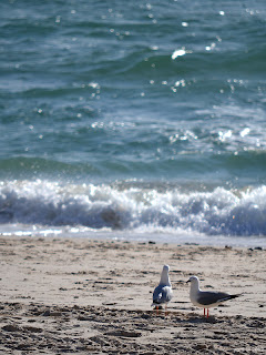 afternoon - gull couple