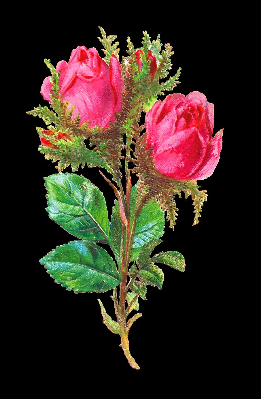 antique images shabby chic scrapbooking digital pink rose flower download. Black Bedroom Furniture Sets. Home Design Ideas