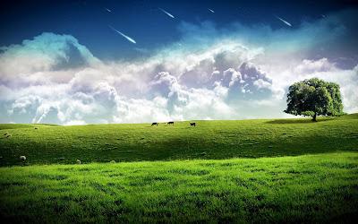 Green pasture widescreen wallpaper