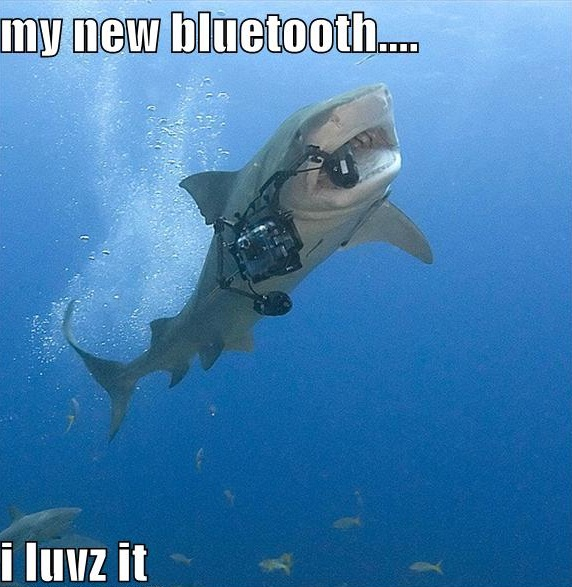 Funny Sharks | Funny Animals Funny Pictures