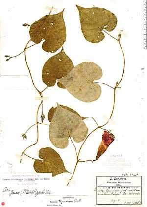 El blog del profe de biolo etiquetas colecci n de bot nica for Botanica general pdf