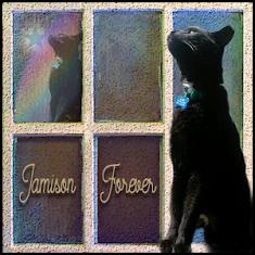 Jamison Furrever