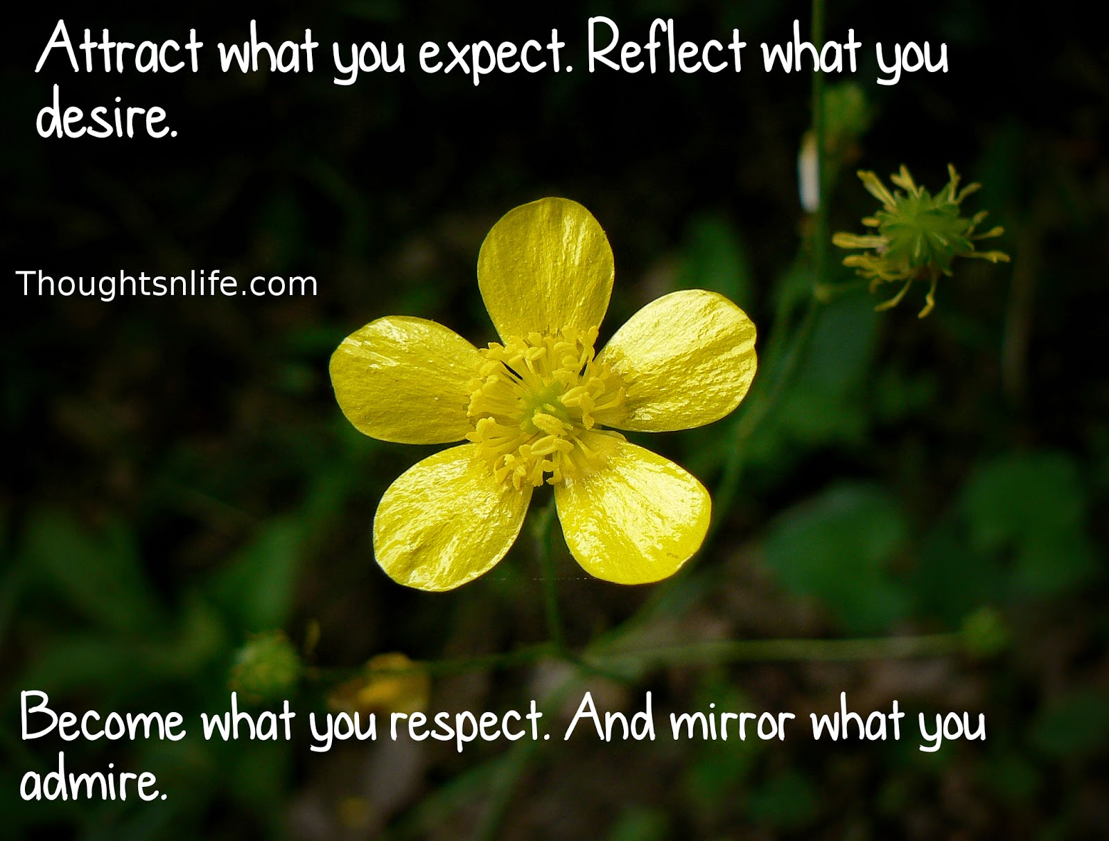 thoughtsnlife, inspirational quotes,Attract what you expect, Reflect what you desire, Become what you respect