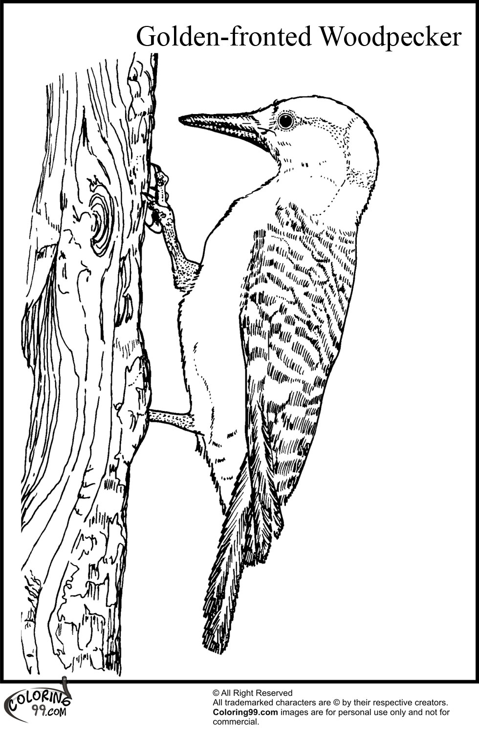 woodpecker coloring pages team colors. Black Bedroom Furniture Sets. Home Design Ideas