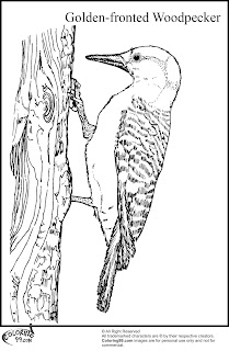 golden fronted woodpecker coloring pages