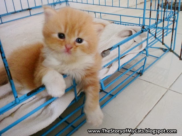 kucing cute