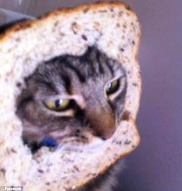 Make-Your-cat-moving-sandwich