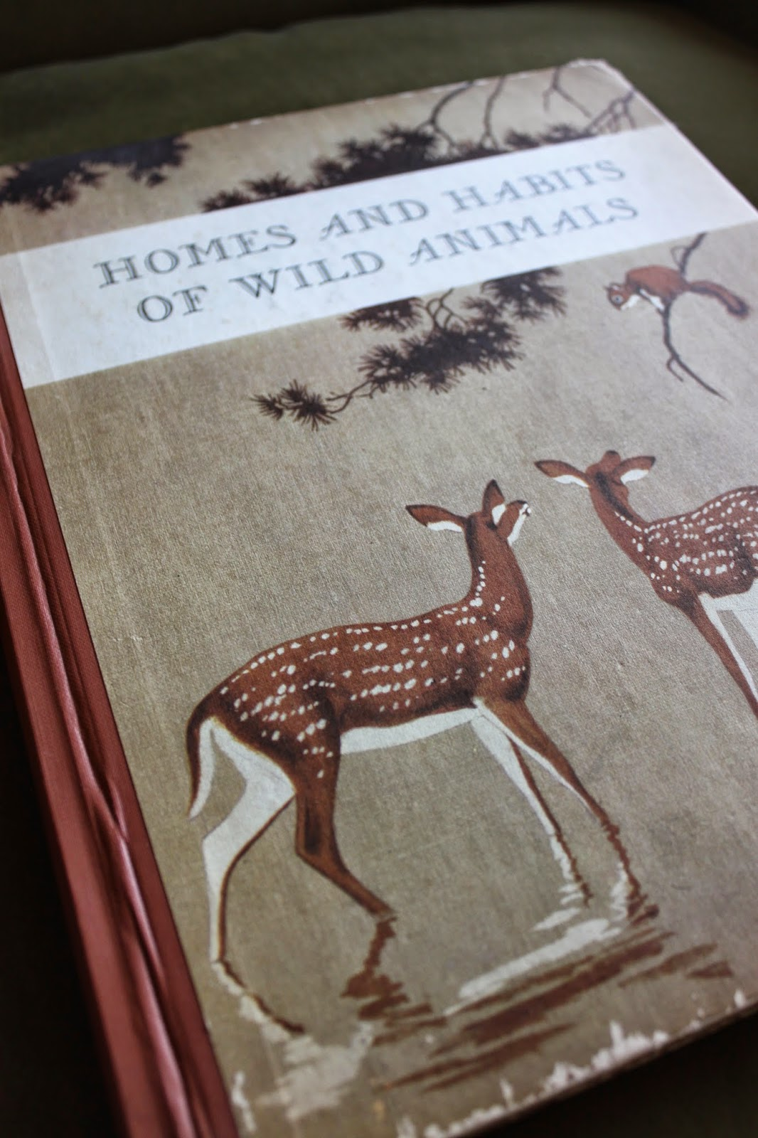 the marlowe bookshelf homes and habits of wild animals