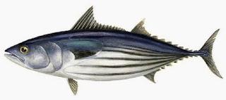 mari mengkonsumsi ikan agar cerdas
