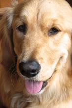 Marley (pup #2)