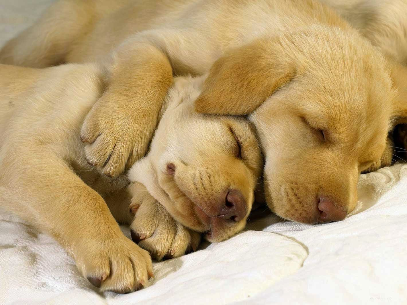 Cute Dogs Sleeping Love