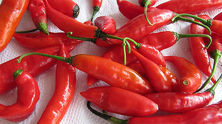 The Presurfer What Is The Hottest Pepper In The World