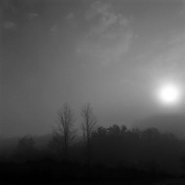 Les arbres dans la brume