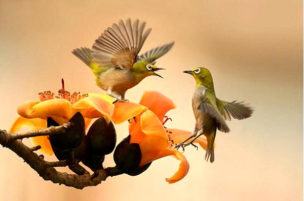 "Kissh Missh: BEAUTIFUL BIRDS ""THE SPLASH OF COLOURS"