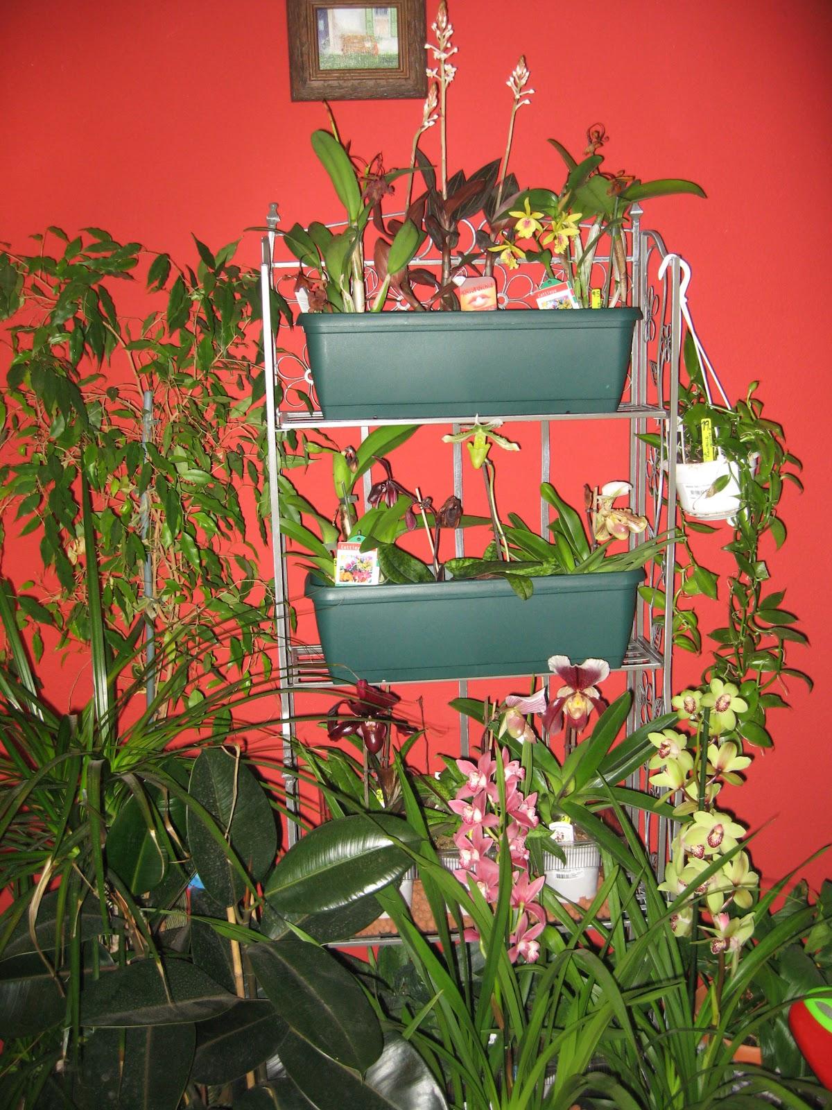 Colocar orqu deas en casa otra soluci n - Estanteria para plantas ...