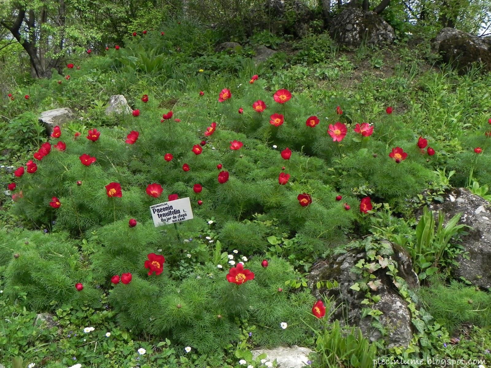 Flori in Gradina Botanica