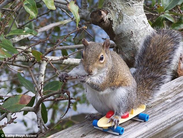 Tupai main skateboard
