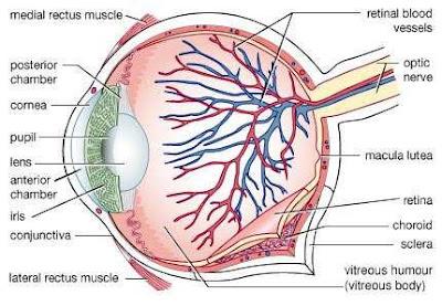 Gangguan Pada Mata (Indra Pengelihatan) Manusia