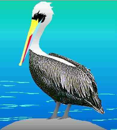 O Pelicano Distribuidora la naturaleza: PEL&#23...