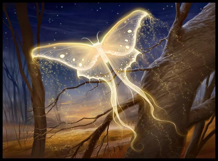 Bonjour tout le monde - Page 4 Golden-light-butterfly