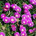 flowers plants.