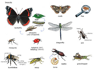 Insect Types Images