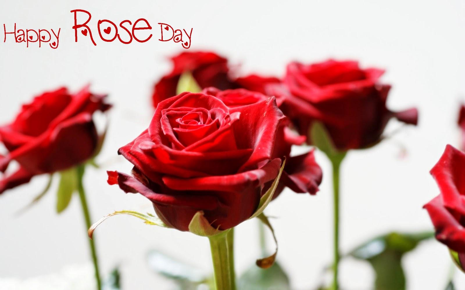 Valentine Rose Wallpaper