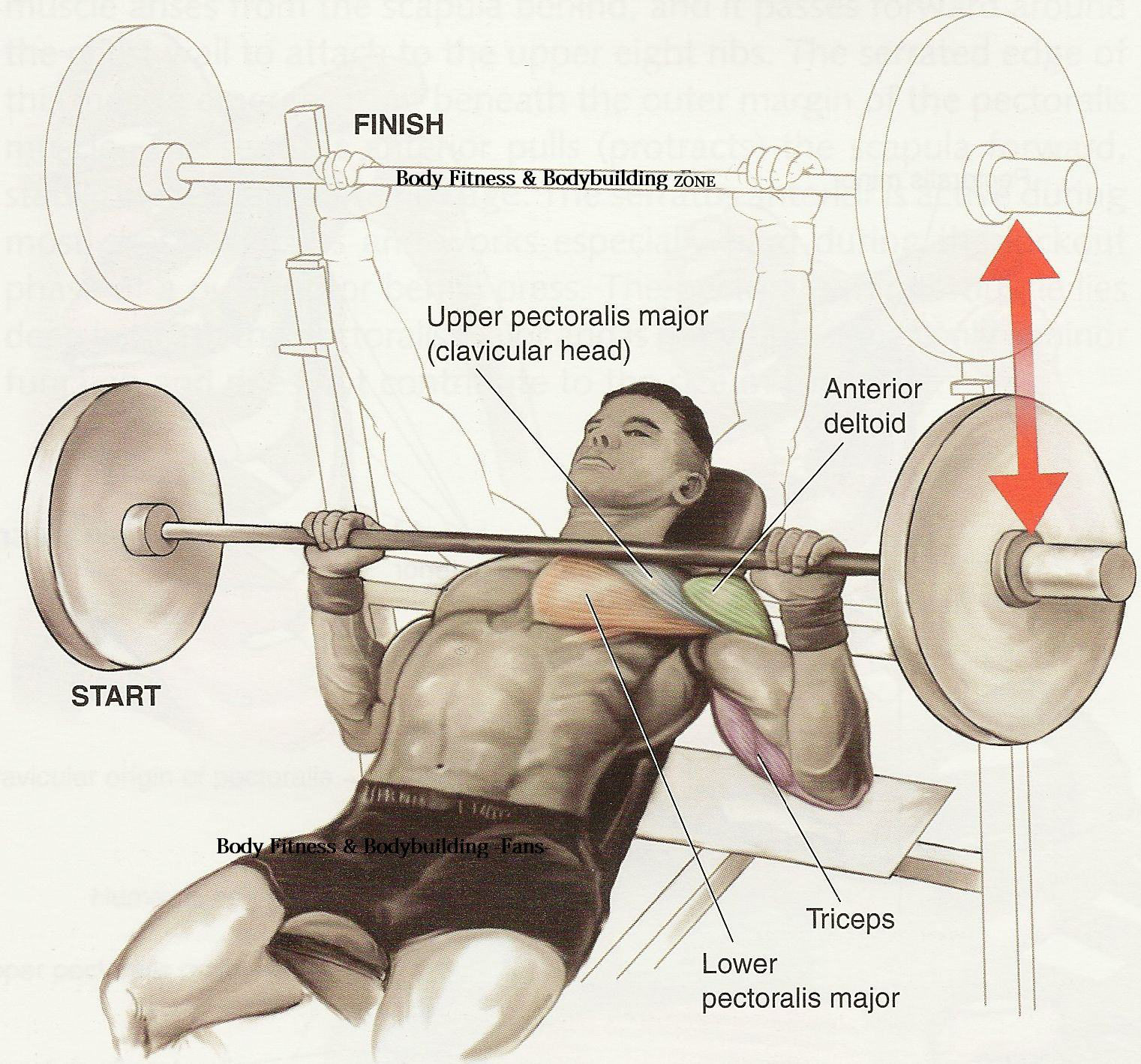 Chest Workout Tips And Exercise