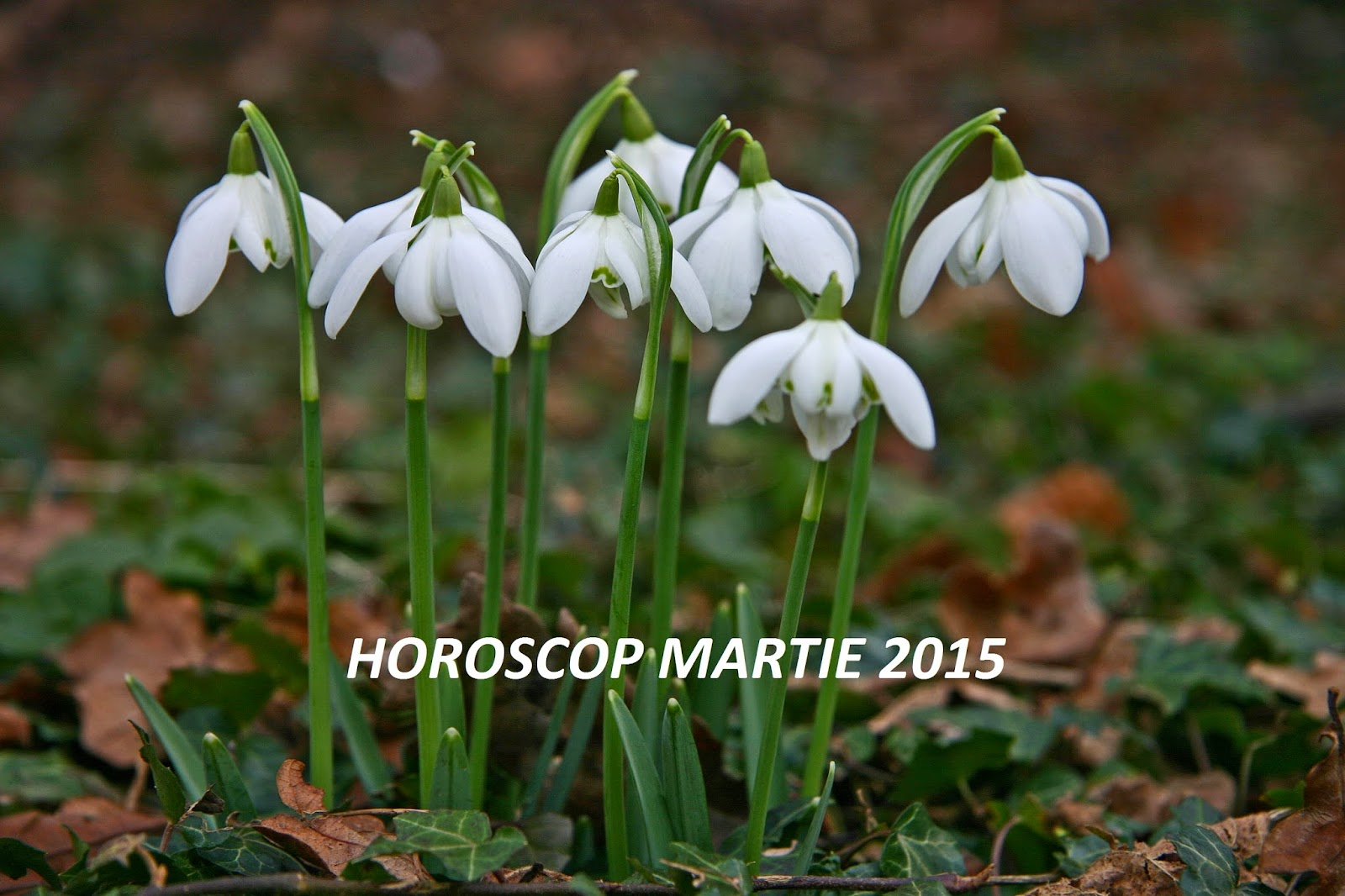 Horoscop martie 2015 - Toate zodiile