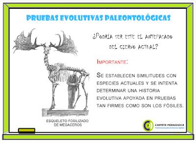 Pruebas Evolutivas Paleontológicas