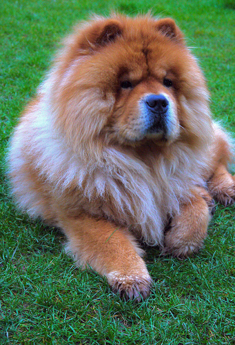 What Is the Oldest Breed of Dog? | 14 Ancient Dog Breeds ...