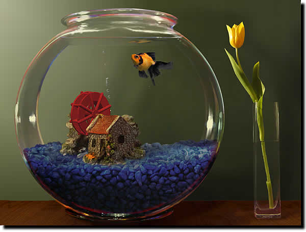 for Petit aquarium boule
