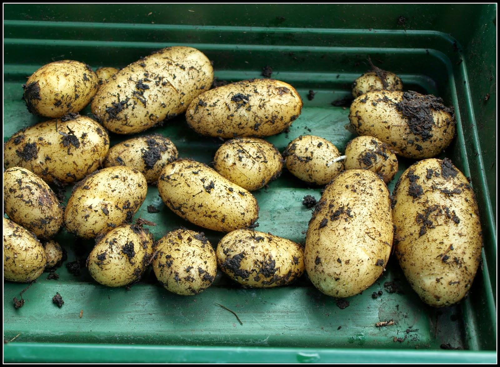 how to cook floury potatoes