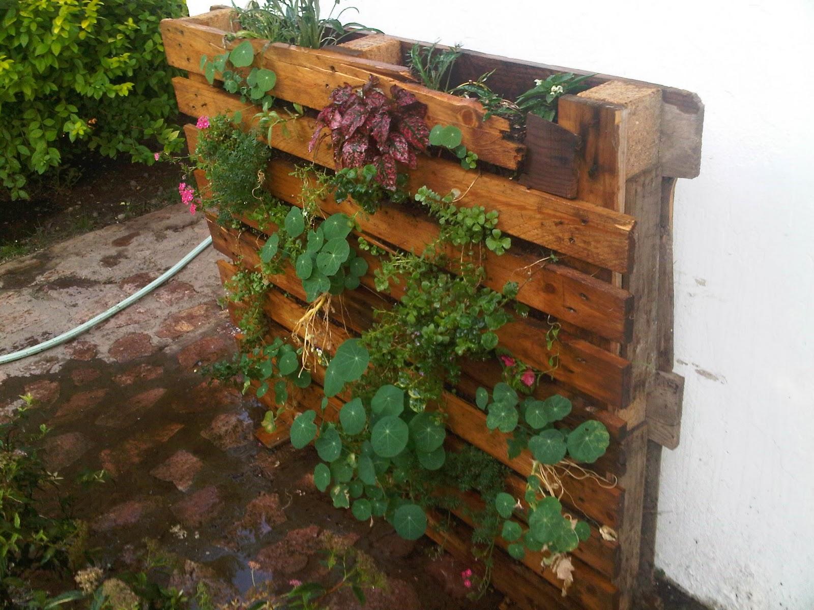 mundo verde y vertical muro vertical con palet de madera On muro vegetal con palet de madera